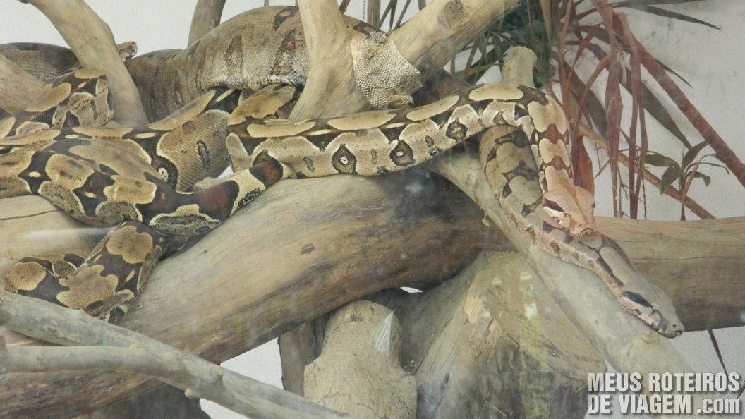 Cobras no Zoológico de Balneário Camboriú