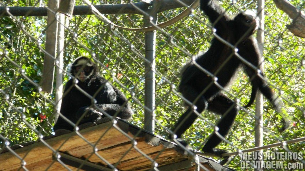 Macacos no Zoológico de Balneário Camboriú