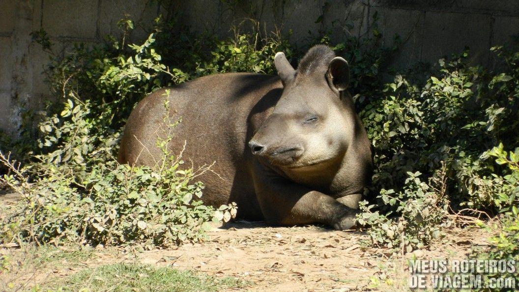 Anta no Zoológico de Balneário Camboriú