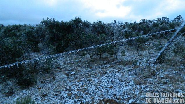 Vegetação e arames congelados