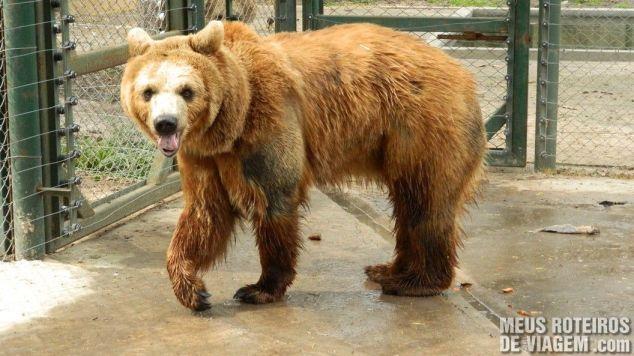 Urso no Zoo Lujan - Buenos Aires