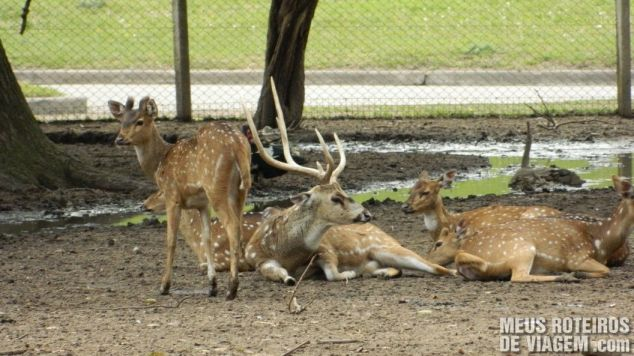 Veados no Zoo Lujan - Buenos Aires