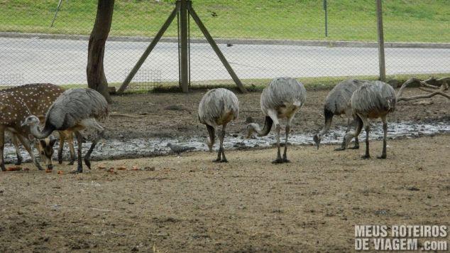 Emas no Zoo Lujan - Buenos Aires