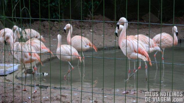 Flamingos no Zoo de Balneário Camboriú