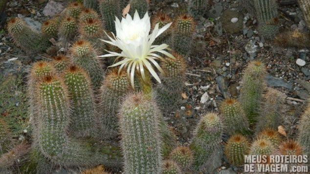 Jardim de Cactus - Reserva Natural Villavicencio, Mendoza Argentina