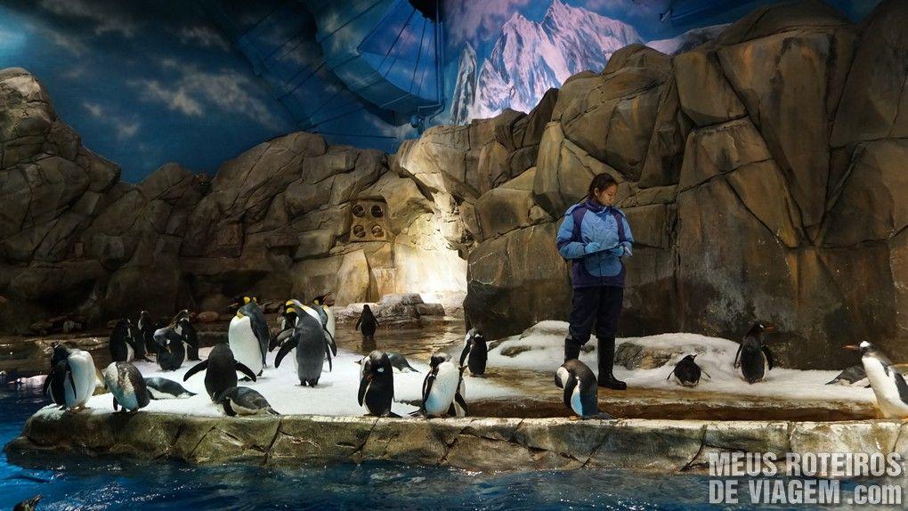 Pinguins no Ocean Park - Hong Kong