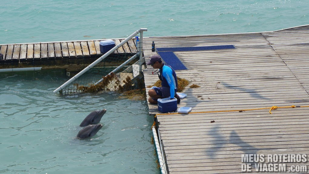 Dolphin Discovery Isla Mujeres - Cancun, México