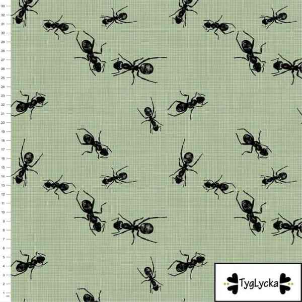Tyglycka - Ants Green Ants green1 1