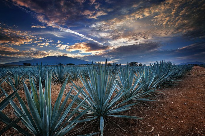 Image result for tequila haciendas