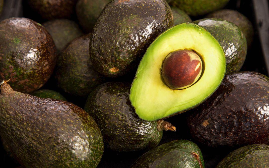 Trabaja Sader en nuevos mercados para productos hortofrutícolas