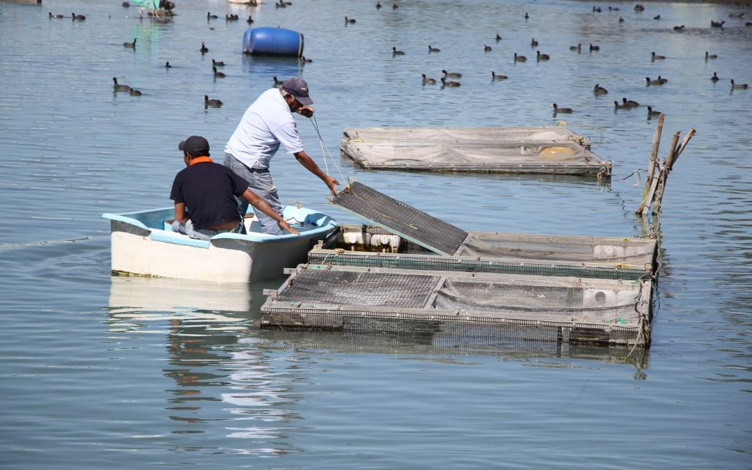 Inicia Conapesa dispersión de mil 159 mdp a Programa Pesquero y Acuícola