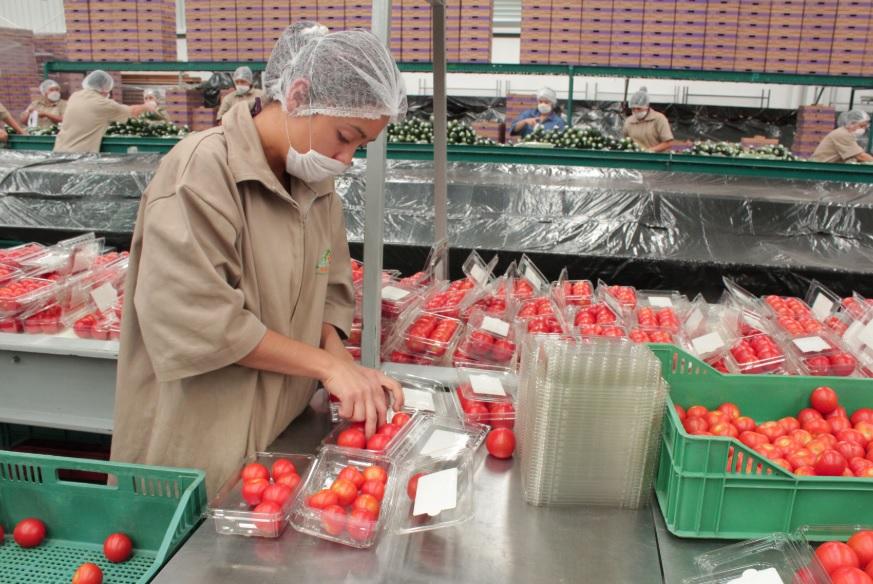 Garantizaràn exportaciones de jitomate y chile a EU