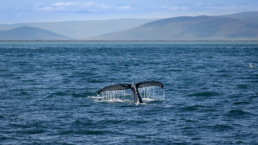 sat mexico tours and travel whale watching baja california michael-behrens-unsplash