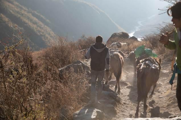 Nepal trekking (187)