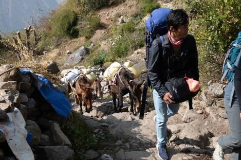 Nepal trekking (4)