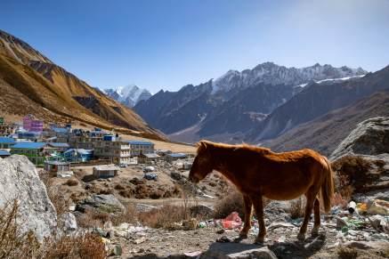 Nepal trekking (55)