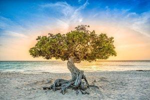 Fofoti Aruba