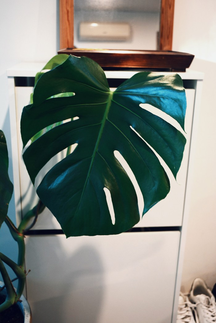 Monstera Tiny Home