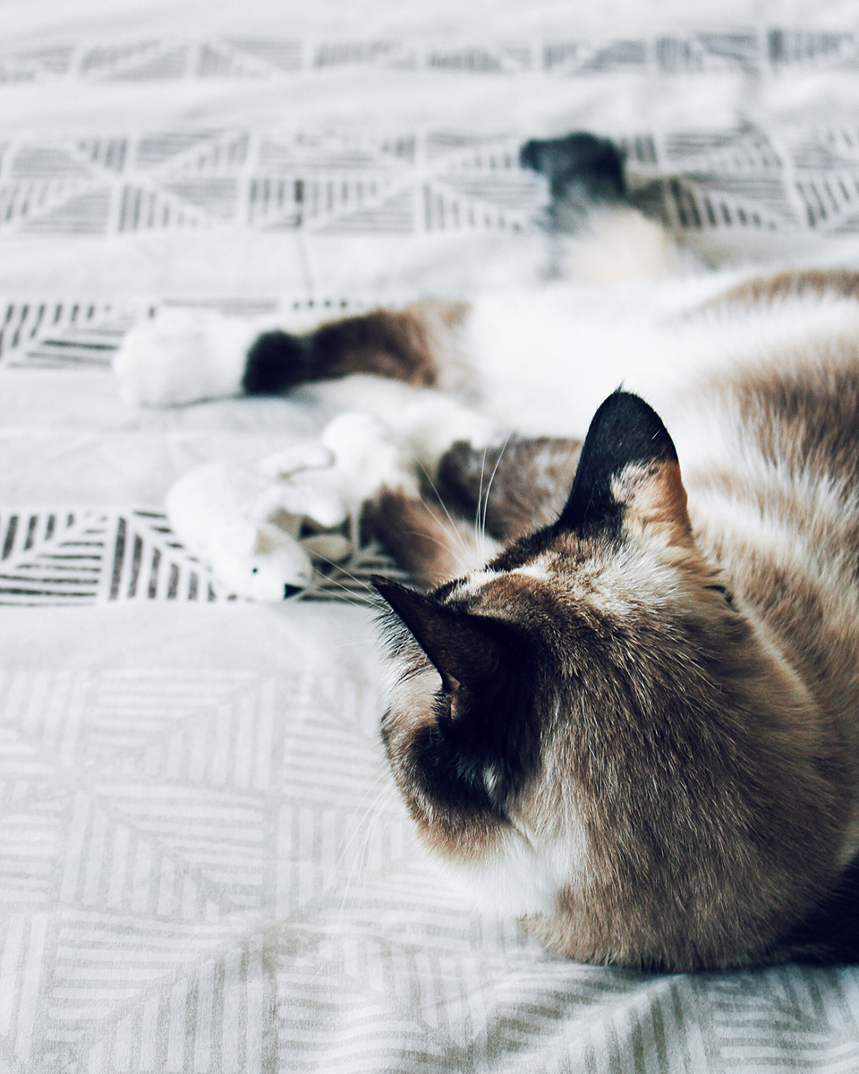 MFARAI Eco Ethical Cat Beds