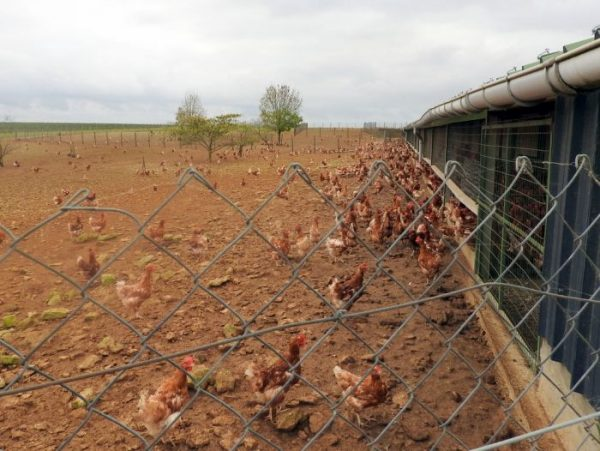 Les TA visitent un élevage de poules pondeuses œufs-Bio et étudient la filière !