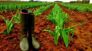Mieux vaut avoir ses bottes pour la récolte des tulipes contre le cancer