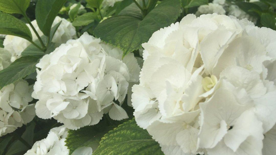 Mettre ses sens en éveil avec les fleurs VendéeFleurs Hocbon Ludovic (23)