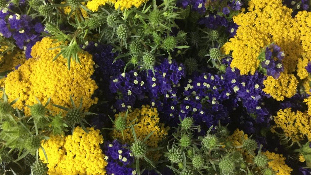 Mettre ses sens en éveil avec les fleurs VendéeFleurs Hocbon Ludovic (37)