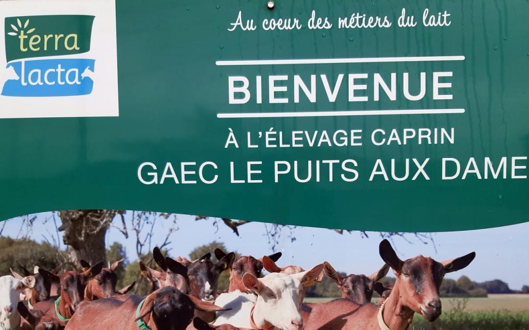 Bienvenue à l'élevage caprin GAEC Le Puits aux Dames