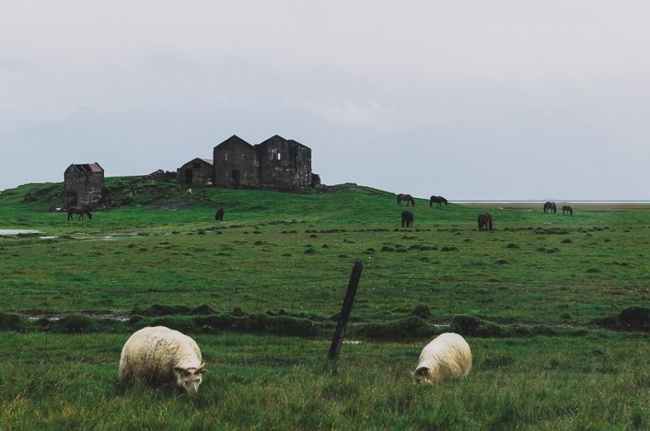 IcelandHofnHella-MGallegly--1420