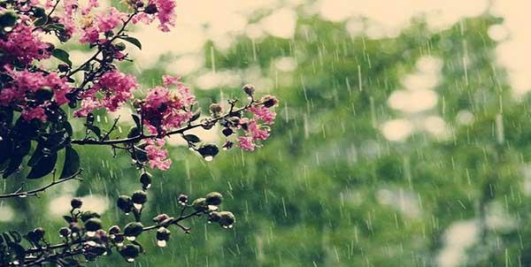 أجمل الكلمات المعبرة عن المطر