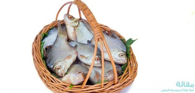 اهمية السمك
