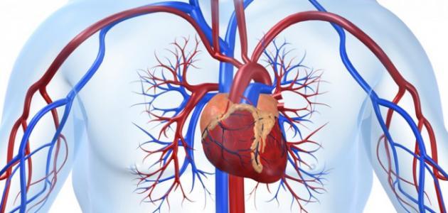 معلومات هامه عن تحمل القلب والأوعية الدموية