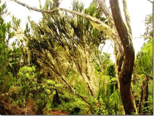 Kilimanjaro Plant Life (15)