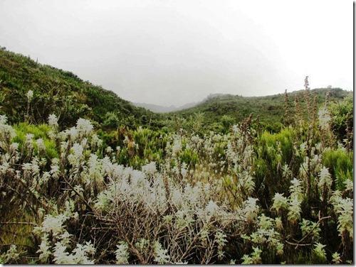 Kilimanjaro Plant Life (20)