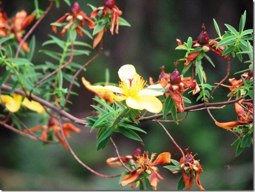 Kilimanjaro Plant Life (3)