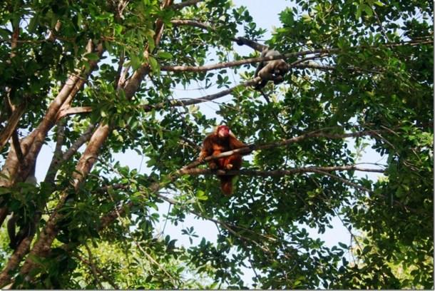 2008_07_17 Brazil Amazon Monkey Park (11)