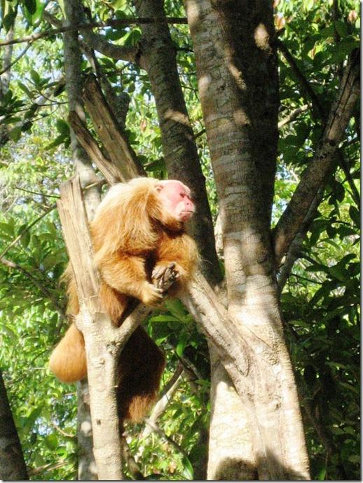 2008_07_17 Brazil Amazon Monkey Park (8)