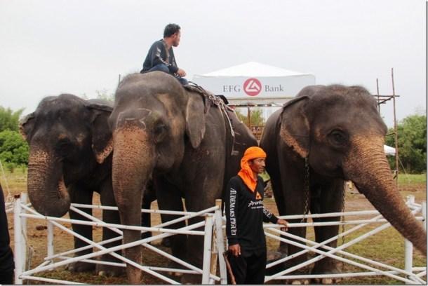 2012_09_06 Thailand Hua Hin Elephant Polo (5)
