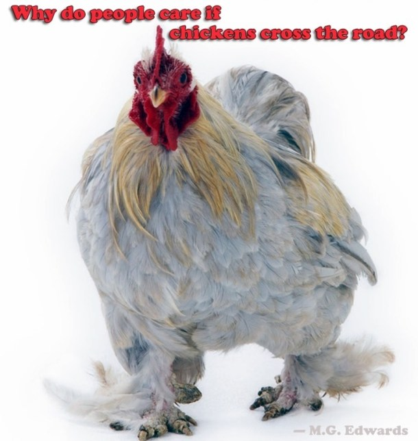 chicken_thumb2