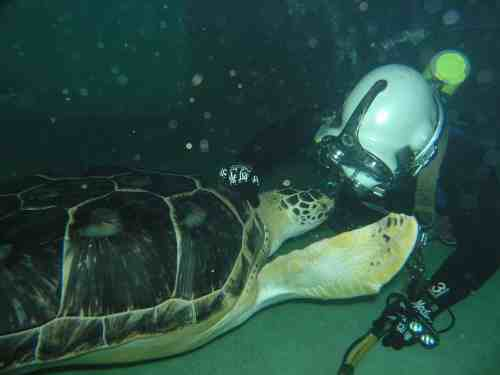 Baltimore Engineering National Aquarium's Blacktip Reef Exhibit
