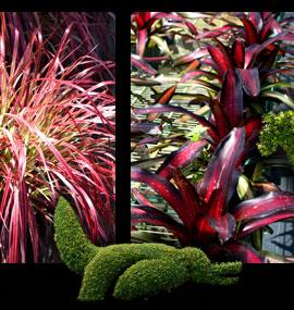 miami garden tours, MiamiCurated, Fraga's Nursery