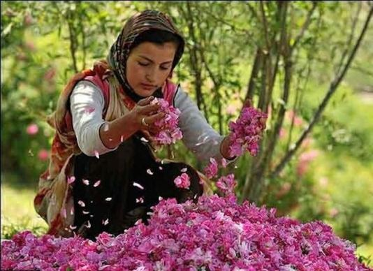 kashan, Iran attractions, what to see in Iran, Iran city of roses