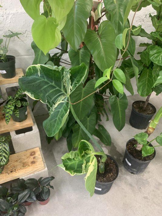 plants Miami