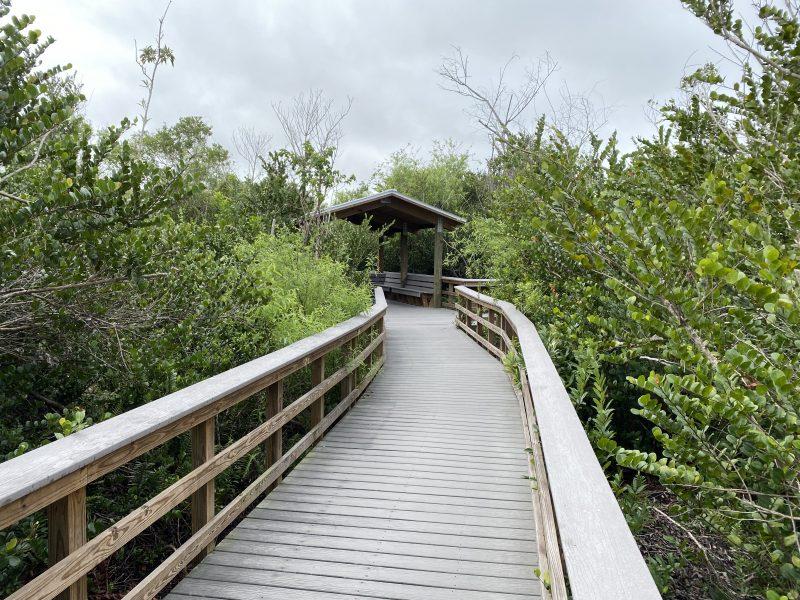 Bobcat Boardwalk Trail Everglades