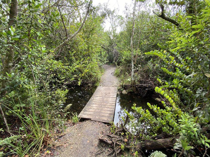 Otter Cave Hammock Trail