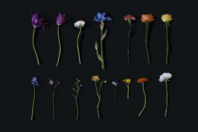 Flowers from stillife