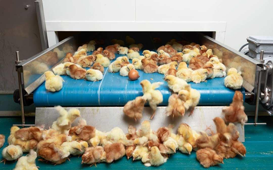 Food – Henk Wildschut