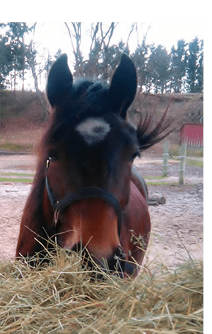 Heste Portalen