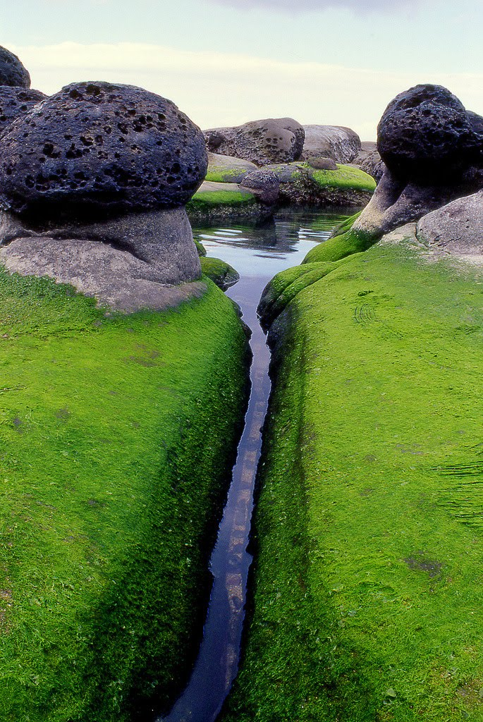 Mossy Inlet, Iceland