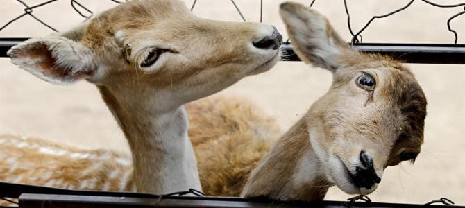 Zoo de Buenos Aires vira ecoparque